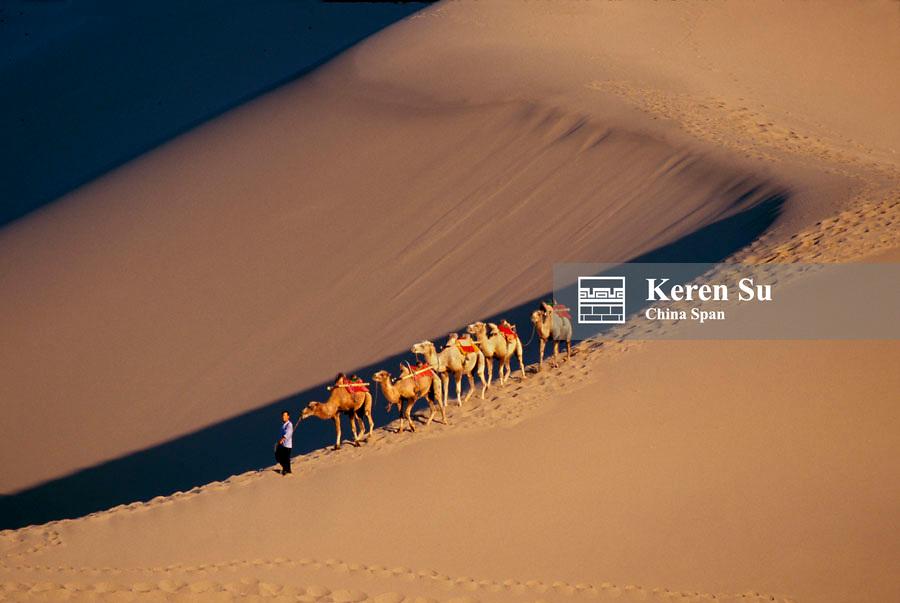 Camel caravan on the Taklimakan Desert at sunset, Dunhuang, Gansu Province, China