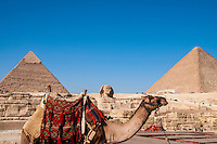 Saddled camel, two pyramids and the Sphinx in Giza, Egypt.