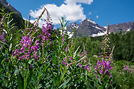 Summer wildflowers at the Maroon Bells in Aspen, Colorado.