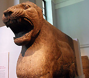 This gigantic standing lion, roaring angrily, formed one of a pair carved half in the round which once flanked the entrance of a small temple dedicated to the goddess Ishtar, adjoining the palace of King Ashurnasirpal II (reigned 883-859 BC). The temple was excavated by Henry Layard in 1849. The placing of figures of lions beside the doors of temples or the gates of cities was an ancient custom in Mesopotamia. Actual lions were common in the region and survived there until the nineteenth century.