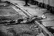 An unidentified murder victim, shot multiple times.  Caracas has one of the highest homicide rates in the world, and over 95% of cases are never resolved.