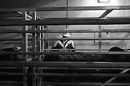 Rodeo 8, Sydney