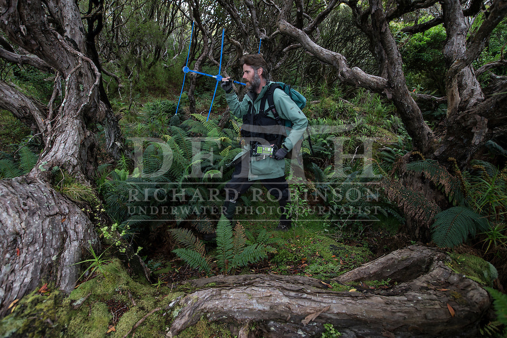 Chris Muller Massey University wildlife biologist tracks Yellow Eyed Penguins that have been attached with radio transmitters to help locate their elusive nests in the Sothern Rata forest at Enderby Island in the subantarctic Auckland Islands archipelago, New Zealand.<br /> 12 January 2016<br /> Photograph Richard Robinson &copy; 2016