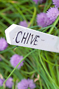 Chive Label