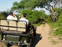 Group of tourists in jeep looking at elephant one man photographing back view