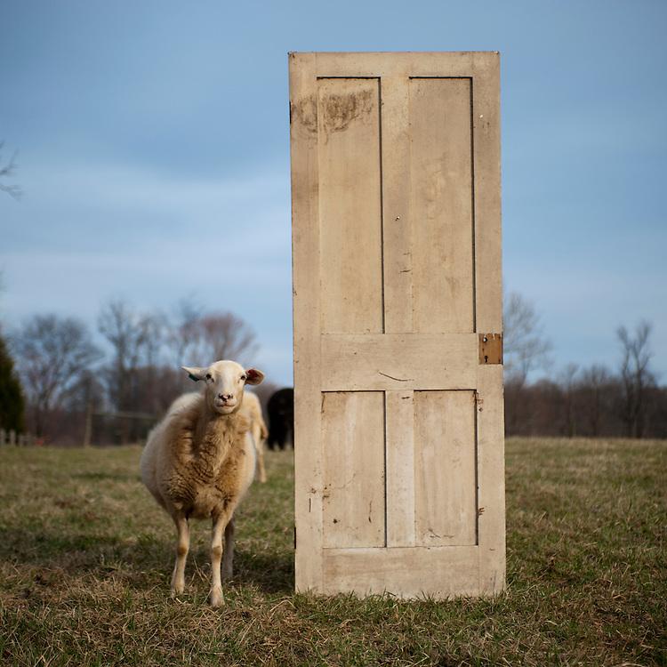 Ram and door