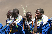 A Group of Maasai women in blue robes. Maasai is an ethnic group of semi-nomadic people. Photographed in Tanzania