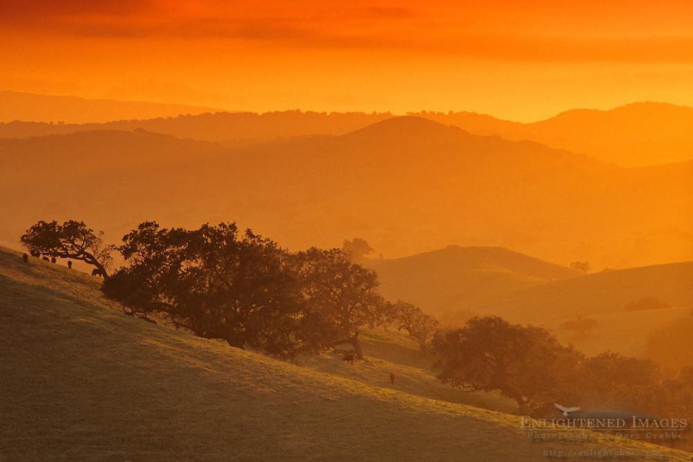 Sunset in the hills near Los Olivos, Santa Barbara County, California