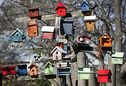 Some of Bill Ayres' 130 bird houses are enjoyed by our fine feathered friends in Prospect Park, Delaware County.
