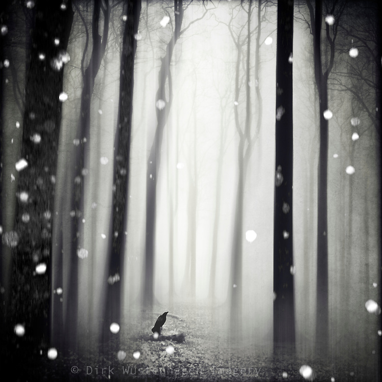 Surreal forest  winter scenery with snow flakes<br />