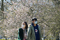 © Licensed to London News Pictures. 16/03/2020. London, UK. A couple wear medical face masks as they enjoy the warm sunshine in St James's Park. Due to Coronavirus spread in London, less people are visiting parks to avoid crowded area. Photo credit: Dinendra Haria/LNP