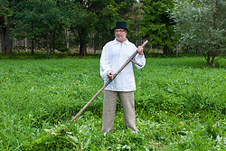 Farmer using scythe to mow grass traditionally in Estonia. Haymaking.