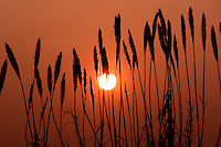 Vegetazioni al tramonto