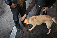 COMO, ITALY - 25 October 2013: During a simulation a cash dog of Italy's Guardia di Finanza (Financial Police) finds hidden cash under the jeans of an officer in Como, Italy, at the border with Chiasso (Switzerland) on October 25th 2013. Cash dogs are sniffer dogs that have specially trained to detect the ink on currency notes. In the effort of cracking down on tax evasion and cash smuggling, the Guardia di Finanza works with highly trained dogs in outposts along its borders with Switzerland and France, and in international airports such as Rome Fiumicino and Milano Malpensa.<br /> <br /> In Italy, the law allows to travel with up to 10,000 euros in cash. Beyond that, one must declare to the authorities.<br /> <br /> In 2012, the Guardia di Finanza of the  borders with Chiasso in Switzerland have intercepted more than 55 million euros not declared. In 2013, until September 31st, they have intercepted more than 92 million euros.  The Guardia di Finanza of the Chiasso outpost has been using cash dogs since 2010.