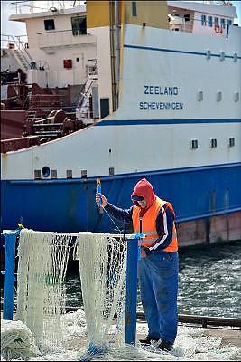 Nederland, the Netherlands, Scheveningen, 19-5-2015On the quay in the harbor of this fishingvillage, personel of a large industrial fishing boat, are expiating, mending,  nets. The fishermen do maintenance, repair and replacement of bad stretches net. The ship is the Zeeland, a trawler.Aan de kade in de haven, vissershaven, van deze vissersplaats staat personeel van een groot, industrieel vissersschip, netten te boeten. Zij doen onderhoud, reparatie en vervanging van slechte stukken net. Het schip is de Zeeland, de SCH 123, PIWT. Vriestrawler.FOTO: FLIP FRANSSEN/ HOLLANDSE HOOGTE