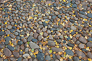 detail: leaves; pattern. patterns; stones; street