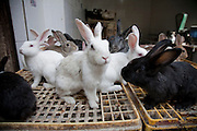 Rabbits are displayed for sale in tentmakers street and market area, Cairo, Egypt.