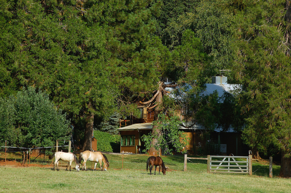Horse Farm near Grass Valley, Gold Country, California, United States of America