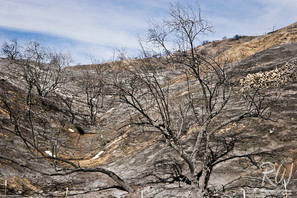 Fire Burned Hillside, Brea, California