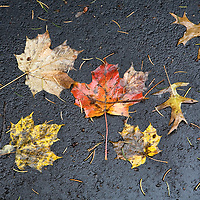 Fallen leaves in the autumn over the pavement on a rainy day