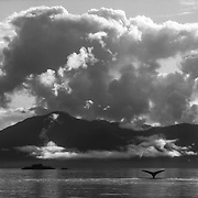 The frequently dramatic skies, clouds and lighting of Southeast Alaska enhances the dramatic setting of the stage upon which the humpback whales perform every summer.