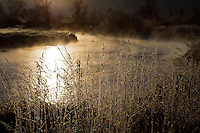 Morning along the Provo River in Utah through the riverside grasses as mist rolls along.
