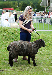 © Licensed to London News Pictures.14/07/15<br /> Harrogate, UK. <br /> <br /> A woman walks her sheep ahead of judging on the opening day of the Great Yorkshire Show.  <br /> <br /> England's premier agricultural show opened it's gates today for the start of three days of showcasing the best in British farming and the countryside.<br /> <br /> The event, which attracts over 130,000 visitors each year displays the cream of the country's livestock and offers numerous displays and events giving the chance for visitors to see many different countryside activities.<br /> <br /> Photo credit : Ian Forsyth/LNP