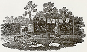 Woman pegging washing on a line. Woodcut by Thomas Bewick, 1804.