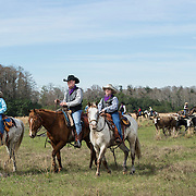 Max Coggins, 8, his grandfather and trail boss Mike Wilder and twin brother Rhett Coggins lead hundreds of cracker cows and riders in the Great Florida Cattle Drive 2016 in Kenansville, FL. The Great Florida Cattle Drive is a living history to commemorate Florida's Cow Hunters living in the 1800's  The re-enactment of what life was like during a cattle drive in the same area of Florida recreating, the challenges, hardships and good times for modern day Floridians to experience. <br />