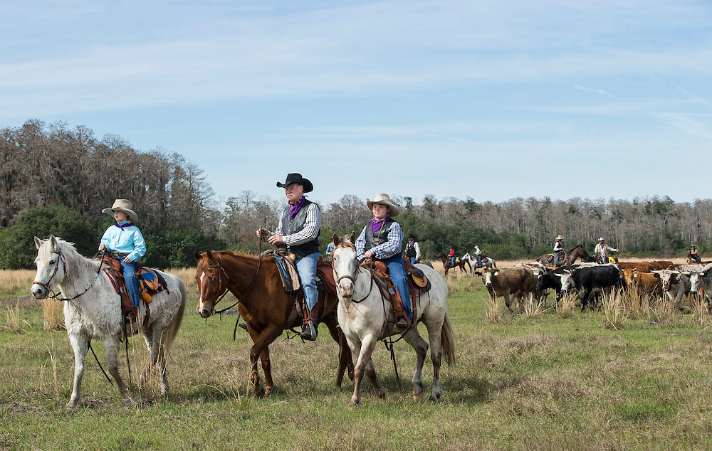 Max Coggins, 8, his grandfather and trail boss Mike Wilder and twin brother Rhett Coggins lead hundreds of cracker cows and riders in the Great Florida Cattle Drive 2016 in Kenansville, FL. The Great Florida Cattle Drive is a living history to commemorate Florida's Cow Hunters living in the 1800's  The re-enactment of what life was like during a cattle drive in the same area of Florida recreating, the challenges, hardships and good times for modern day Floridians to experience. <br /> (Willie J. Allen Jr.)