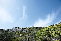 Località Ciolo, marzo 2013.Il Ciolo è un profondo canyon scavato nel corso dei millenni dalle acque meteoritiche. Il nome deriva dalle gazze ladre, dette Giole o Ciole nel dialetto salentino, che abitavano la zona fino a pochi anni fa.?L'alto costone roccioso è ricoperto dalla vegetazione sempreverde della macchia mediterranea e da piante autoctone come il Fiordaliso del Capo di Leuca e alcune specie di orchidee selvatiche. La presenza di numerose grotte, protagoniste di ritrovamenti fossili e ceramici, fanno dedurre che la località fu abitata sin dal Neolitico e dal Paleolitico. La Grotta delle Prazziche, cavità lunga 42 metri e larga circa 6, ne è un esempio. In essa, i numerosi rinvenimenti hanno riportato alla luce pezzi di ceramica, di manufatti del periodo litico e resti di fauna comprendente anche rinoceronti. (fonte http://www.costedelsud.it)
