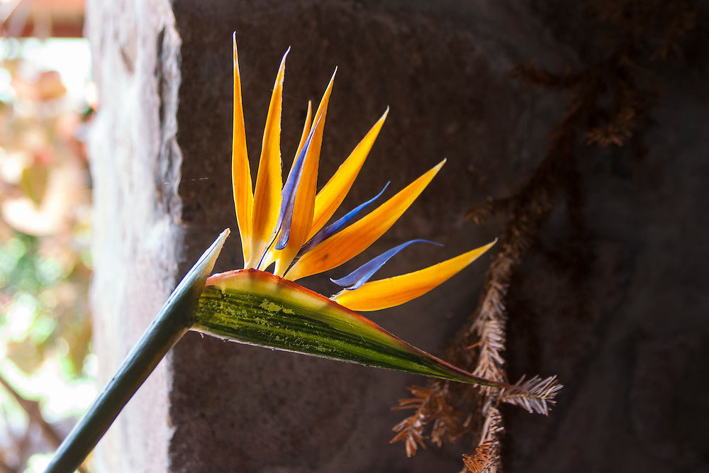 Bird of Paradise tropical flower blossom exotic