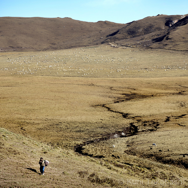 Woman carries yak's dung in Langmusi, Gansu Province, Tibetan part of China on Oct 13, 2015. Yak's dung is used as fuel for heat and cooking.<br /> (Photo by Kuni Takahashi)