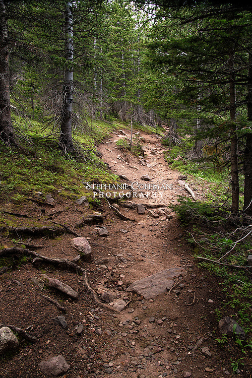 Part of the Music Pass trail in Colorado goes through a wonderful forest fully of spruce and pine trees