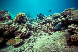 Reef fish underwater at Clerke Lagoon.