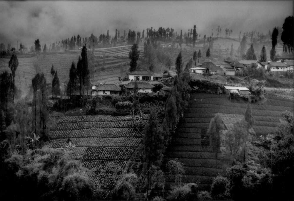 A very temperate landscape on the high slopes approaching Bromo Volcano where crops like rice, papaya and coconut give way to cabbage, carrots and tomatoes and Islam gives way to Hinduism.  Near Ngadisari, Java, Indonesia.