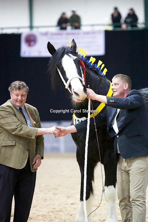 Alistair King's COTEBROOK LOCH ANNA  (No.126)<br /> Sire  Moorfield Edward<br /> Dam  Cotebrook Loch Carrol<br /> Winner Fillies 3 years old, Junior Champion Female , Female Champion