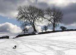 July 21, 2019 - Snowy Field, Weardale, County Durham, England (Credit Image: © John Short/Design Pics via ZUMA Wire)
