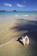 Lanikai Beach (conch shell planted), Oahu, Hawaii, USA<br />