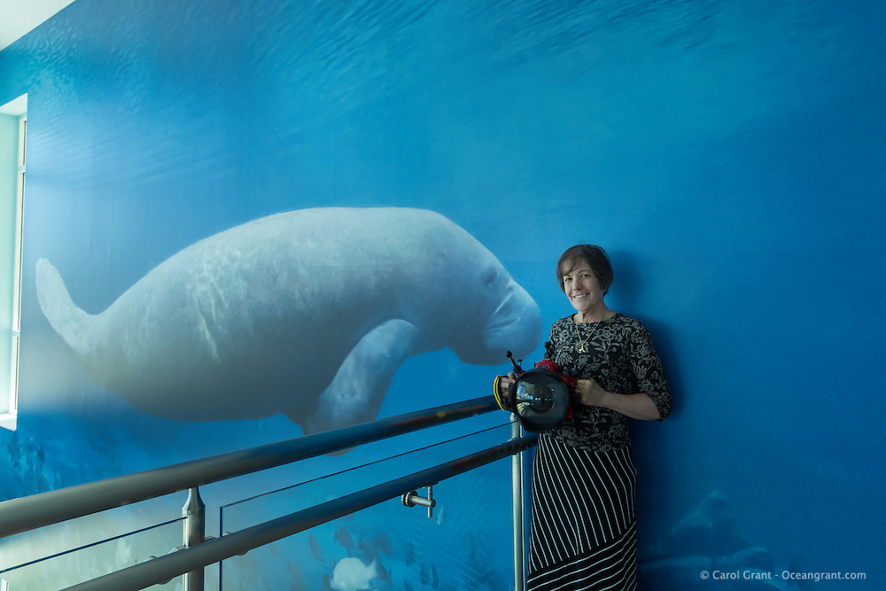 Underwater photographer Carol Grant stands next to her two and one-half story high manatee with gray snapper photograph at Manatee Lagoon Eco-Discovery Center, West Palm Beach, Florida. She uses Subal underwater housings and Nikon DSLRs.
