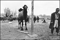 Chine. Province du Sinkiang (Xinjiang). Kashgar (Kashi). // China. Sinkiang Province (Xinjiang).  Kashgar (Kashi).