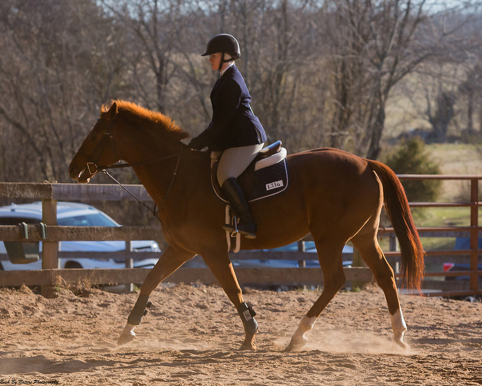 Image from the February 4, 2017 IEA show held at Century Manor Farm in Nokesville, VA