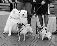 My Dog Loves Central Park 2014