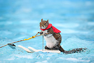 Twiggy The Water-Skiing Squirrel Set To Retire - 20 July 2018