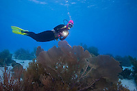 Bonaire, Netherlands Antilles, is am island marine park and popular scuba diving Mecca.