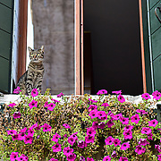 Cats in Venice   - Venice in Colours!<br />