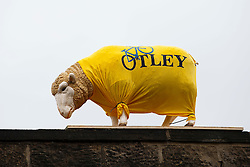 A decorated model sheep along the Stage 1 Route in Otley - Photo mandatory by-line: Rogan Thomson/JMP - 07966 386802 - 04/07/2014 - SPORT - CYCLING - Yorkshire - Le Tour de France Grand Depart Previews.