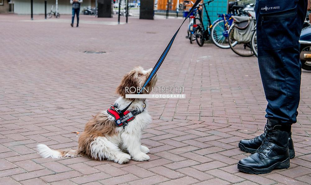 ROTTERDAM - Hond Kyara van de Rotterdamse politie. De politie eenheid Rotterdam leidt Kyara samen met hond Twix op tot speciale aaihonden ten behoeve van slachtoffers van een ernstig (zeden) misdrijf. Hond Twix van de Rotterdamse politie. De politie eenheid Rotterdam leidt Twix samen met hond Kyara op tot speciale aaihonden ten behoeve van slachtoffers van een ernstig (zeden) misdrijf.  copyright robin utrecht