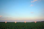 Crops, Smithshire, IL.