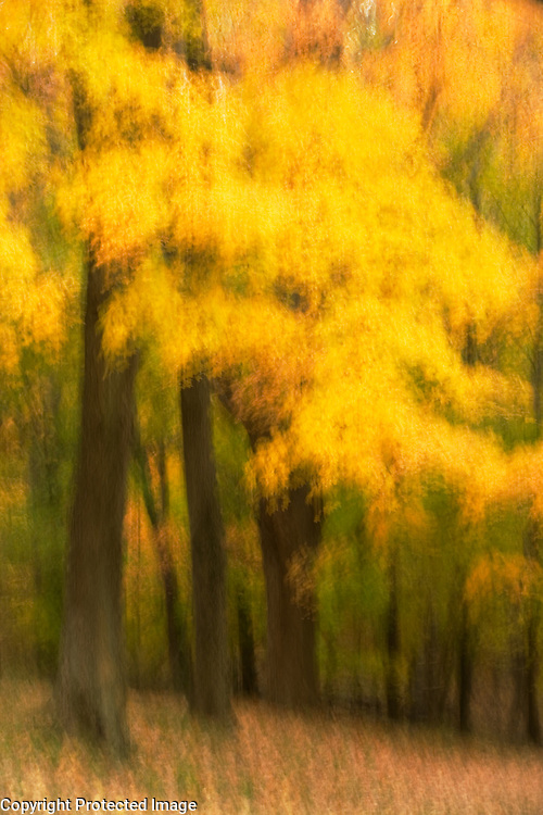 Yellow Forest #4, Watchtung Reservation, New Jersey